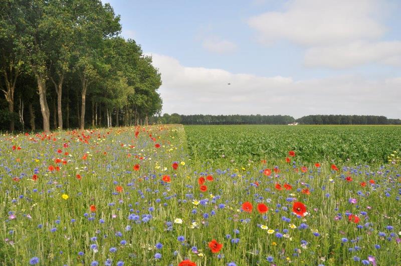 Agrarisch Natuur- en Landschapsbeheer